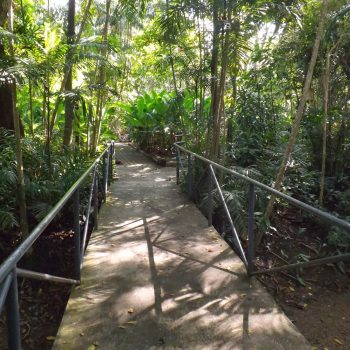 Port Moresby Nature Park is Papua New Guinea's leading botanical and native zoological parks and gardens - New Guinea Campaign 75th Anniversary Tour